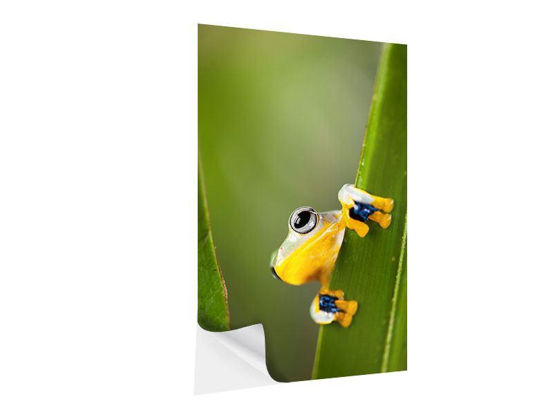 Klebeposter Frosch
