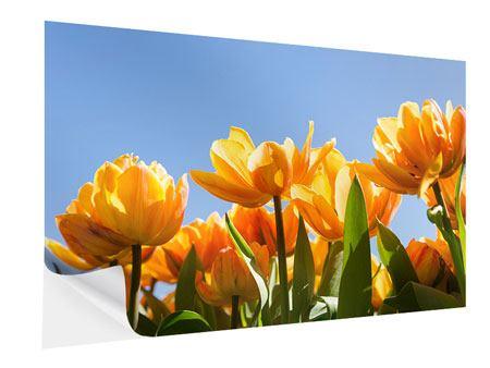 Klebeposter Märchenhafte Tulpen