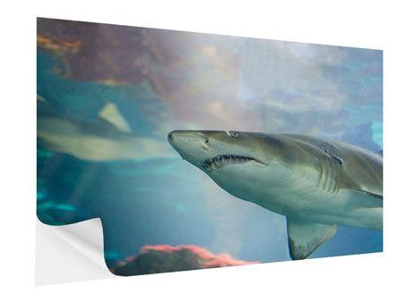 Klebeposter Hai