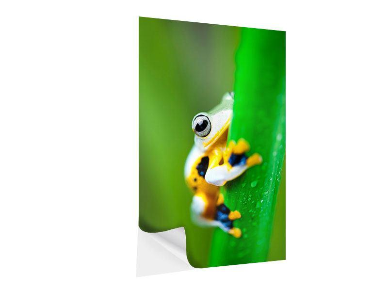 Klebeposter Der Frosch