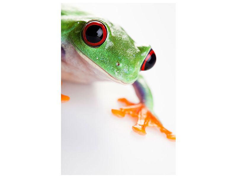 Klebeposter Frosch Close up