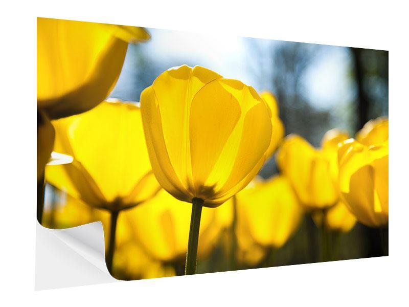 Klebeposter Gelbe Tulpen in XXL