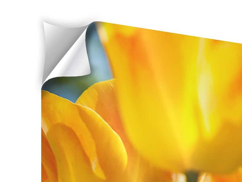 Klebeposter Im Tulpenbeet