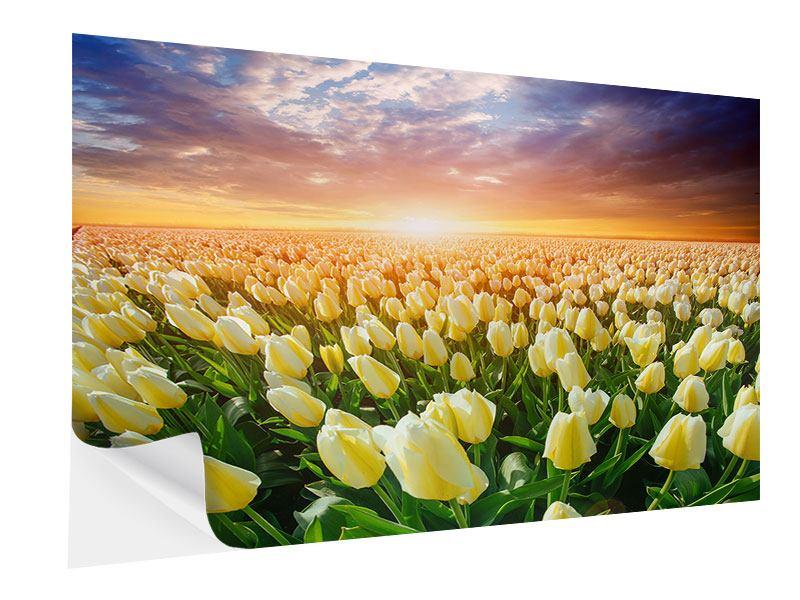 Klebeposter Sonnenaufgang bei den Tulpen