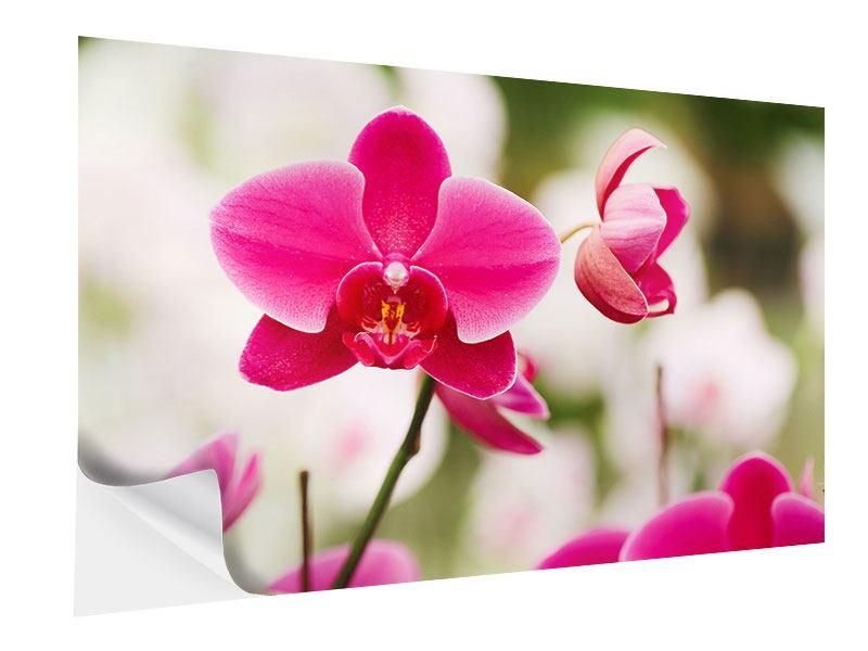 Klebeposter Perspektivische Orchideen