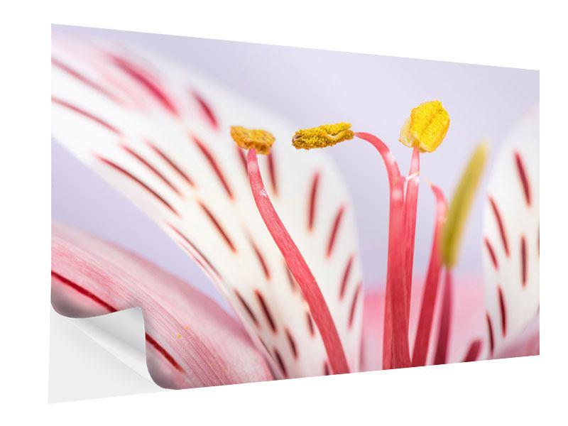 Klebeposter Close Up Die exotische Schönheit