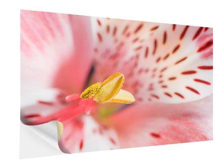 Klebeposter Der Lilienstempel