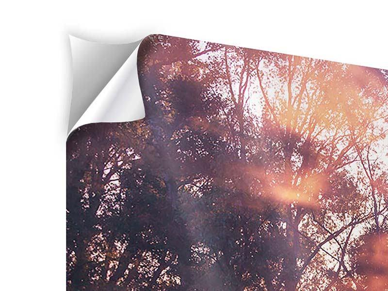 Klebeposter Die Waldspiegelung