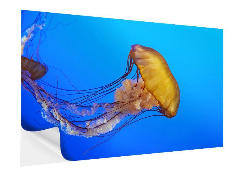 Klebeposter Medusa
