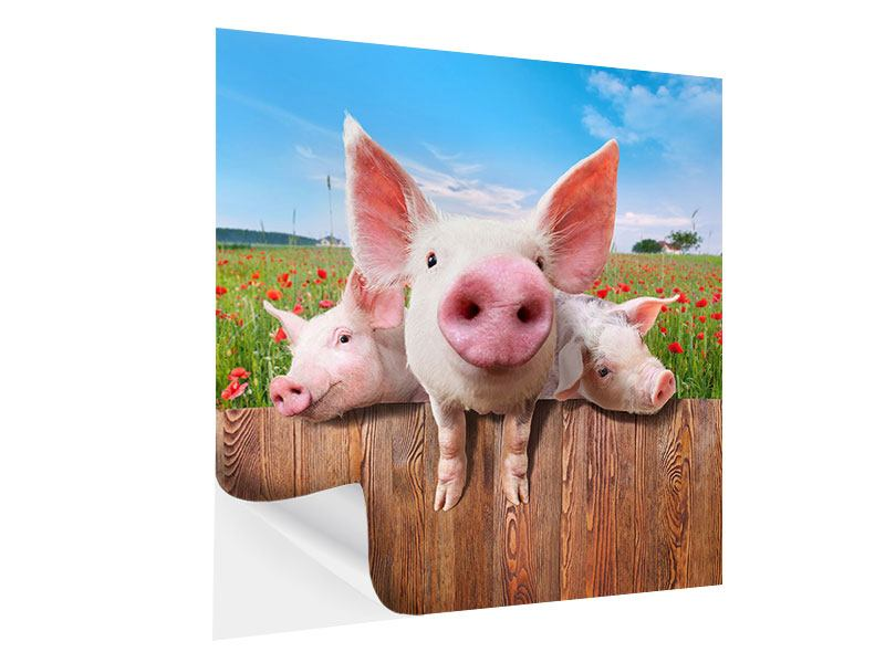 Klebeposter Schweinchen im Glück