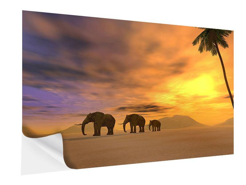 Klebeposter Wüstenelefanten