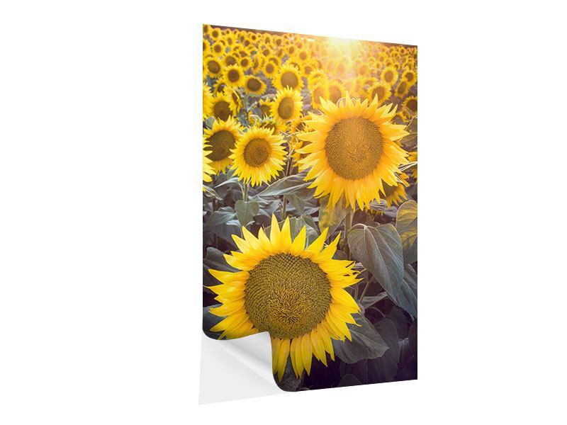 Klebeposter Die Sonnenblumenperspektive