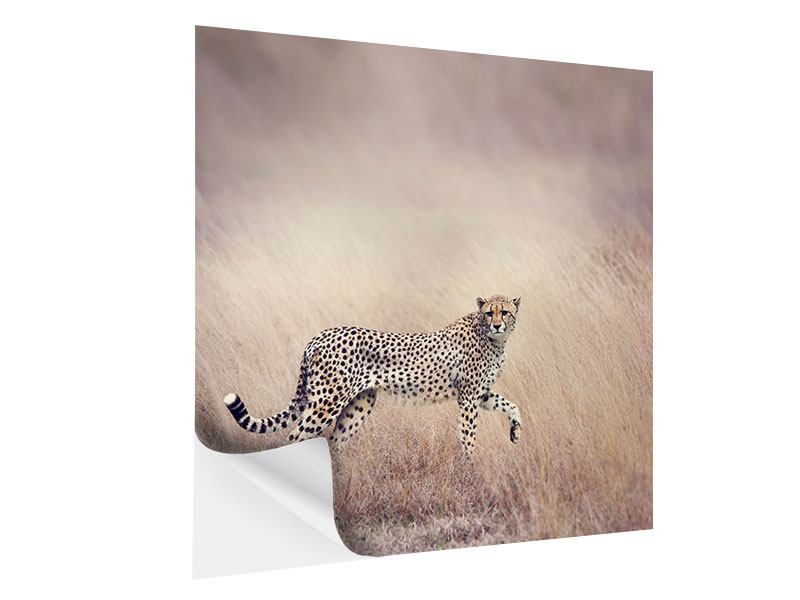 Klebeposter Gepard