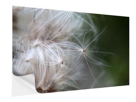 Klebeposter Close up Blütenfasern