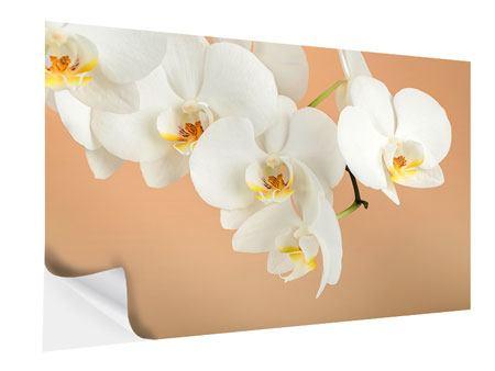 Klebeposter Weisse Orchideenblüten