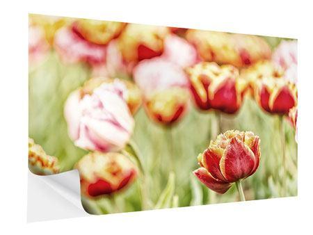 Klebeposter Die Schönheit der Tulpe
