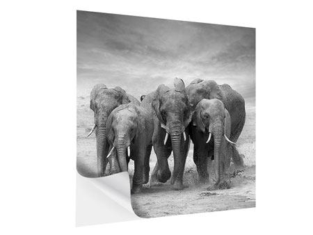 Klebeposter Die Elefanten