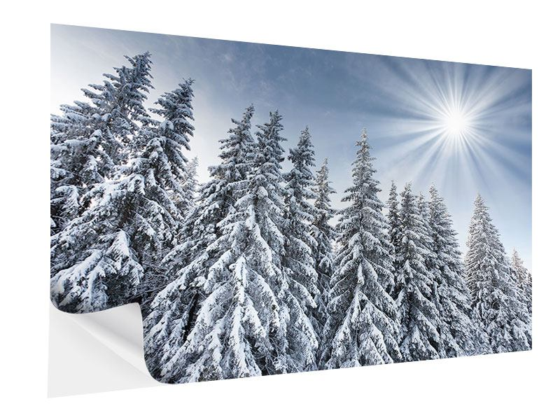 Klebeposter Wintertannen