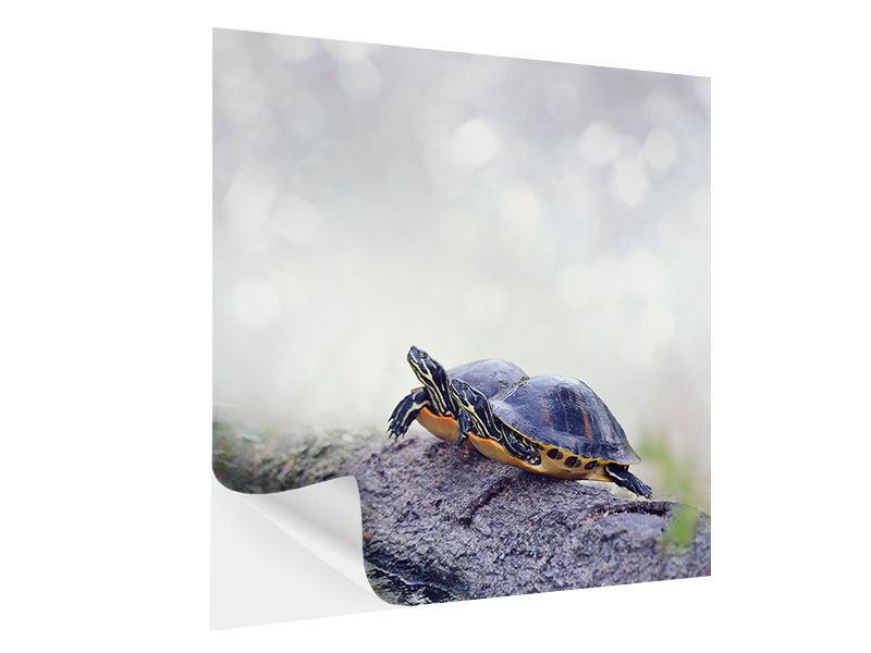 Klebeposter Schildkrötenpaar