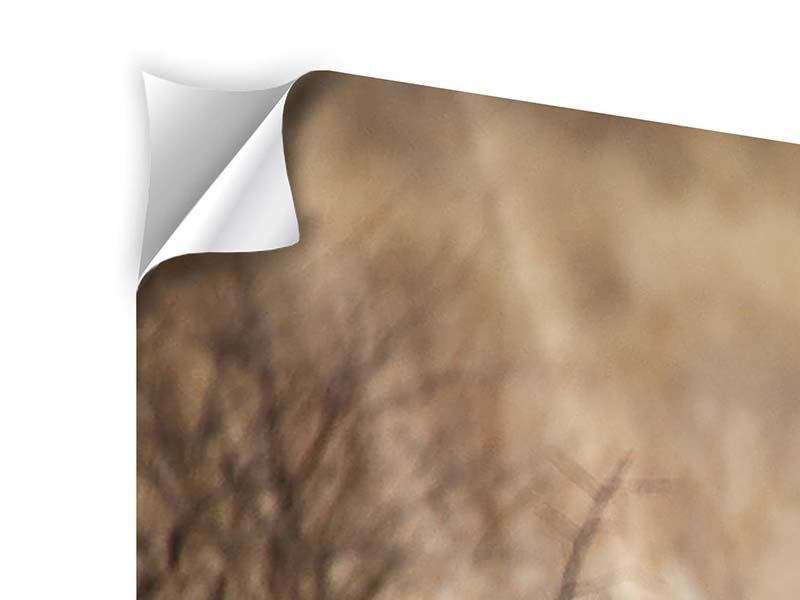 Klebeposter Eleganter Gepard