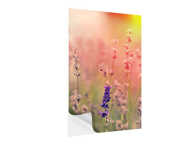 Klebeposter Der Lavendel