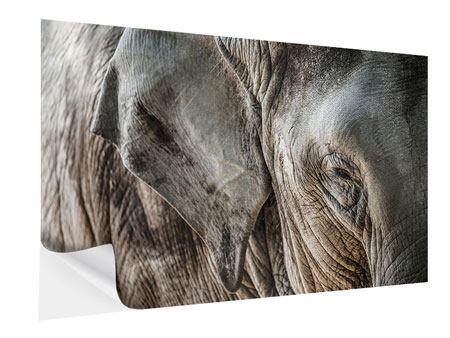 Klebeposter Close Up Elefant