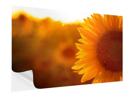 Klebeposter Macro-Sonnenblume