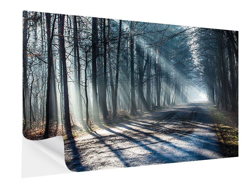 Klebeposter Wald im Lichtstrahl