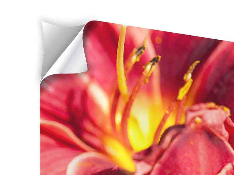 Klebeposter Rotes Lilienduo