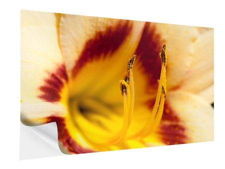 Klebeposter Riesenlilie