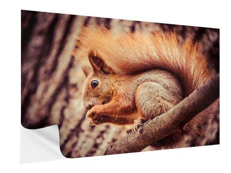 Klebeposter Eichhörnchen