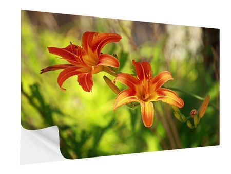 Klebeposter Lilien in der Natur