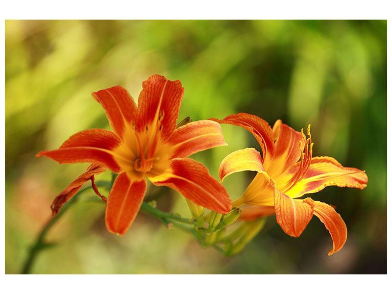 Klebeposter Natural Lilien