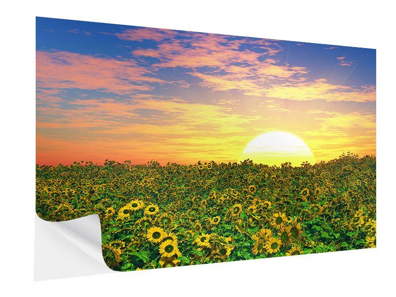 Klebeposter Blumenpanorama bei Sonnenuntergang