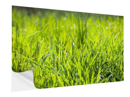 Klebeposter Gras im Morgentau