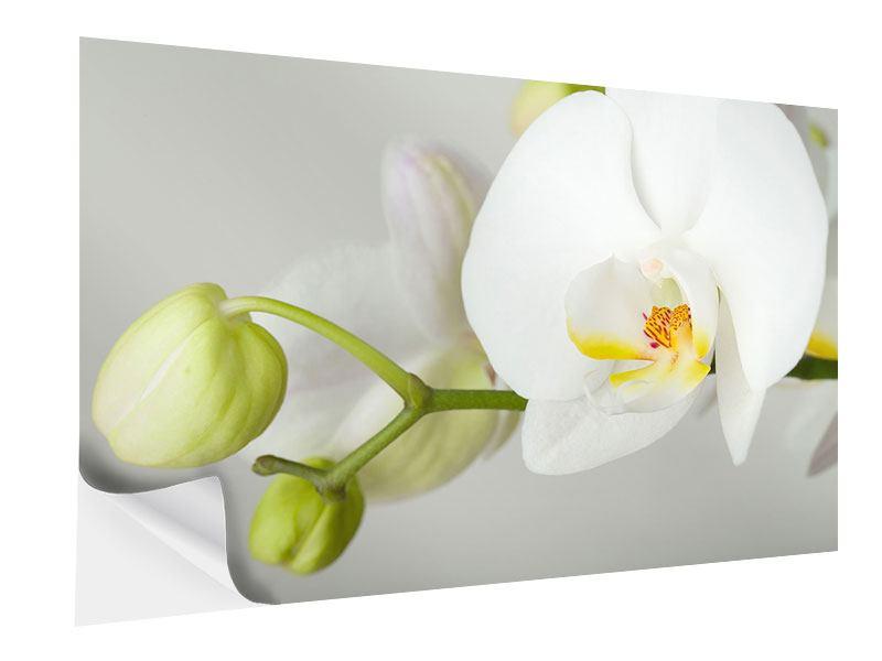 Klebeposter Riesenorchidee