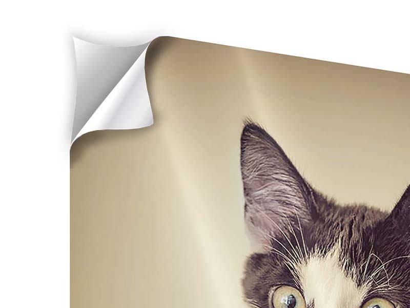 Klebeposter Katze