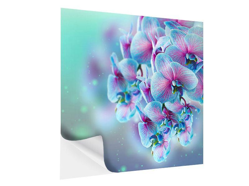 Klebeposter Farbige Orchideen