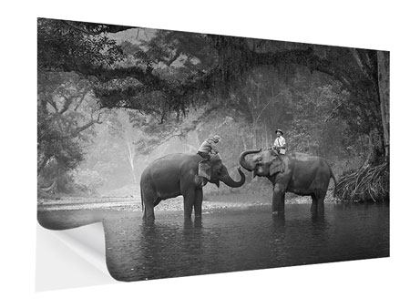 Klebeposter Zwei Elefanten