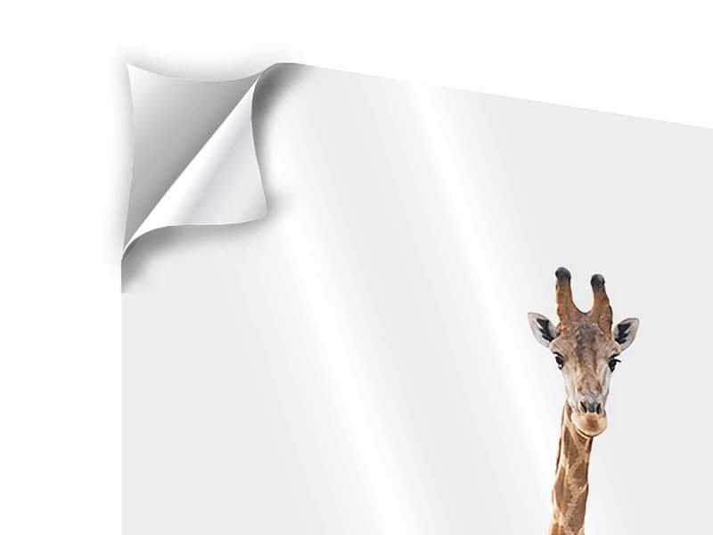 Klebeposter Die lange Giraffe