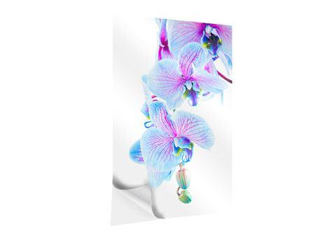 Klebeposter Orchideen-Schmetterling