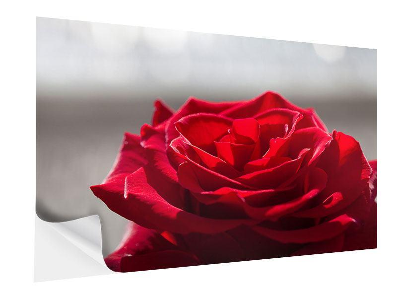 Klebeposter Rote Rosenblüte