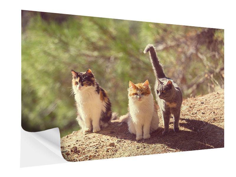 Klebeposter Katzen im Garten