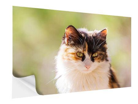 Klebeposter Katzenbesuch