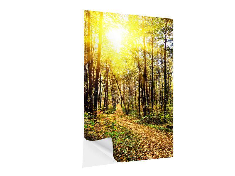 Klebeposter Waldspaziergang in der Herbstsonne