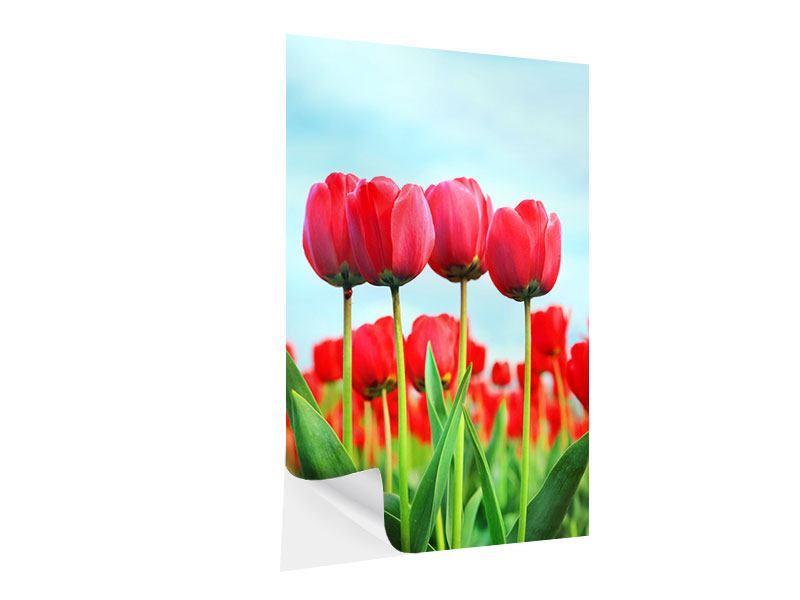 Klebeposter Rote Tulpen
