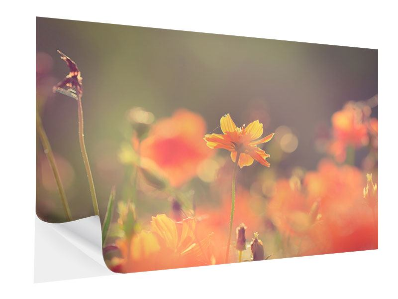 Klebeposter Blütenpracht