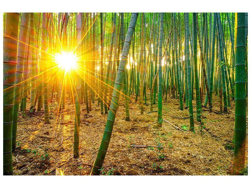 Klebeposter Bambusse