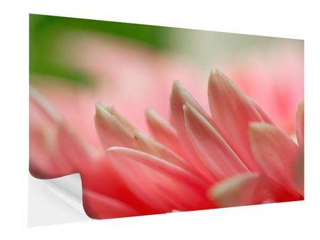 Klebeposter Close Up einer Blüte