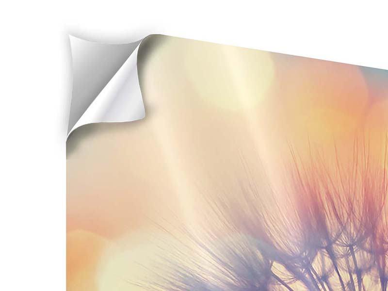 Klebeposter Die Pusteblume im Licht